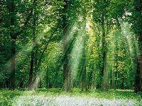 2017中国森林旅游节将于9月25日上海开幕
