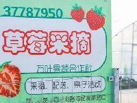 上海各区草莓采摘地指南