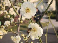 阳春三月 申城公园各类花展活动等你来