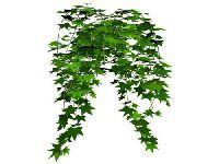 冬季盆栽推荐 给生活一丝活力