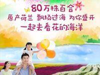 2017苏州太湖百合花节(时间+地点+亮点