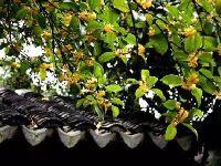 2017苏州光福景区秋季活动安排一览