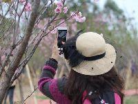 2018年春节大鹏游玩攻略  赏花、美食、