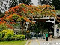深圳东湖公园凤凰花开 赏花指南及图片