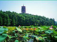 仙湖植物园内的塔叫什么塔