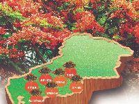 深圳南山哪里有凤凰花?赏花地点盘点