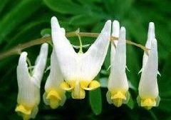 临洮花卉竞芳菲