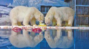 """哈尔滨极地馆""""熊孩子""""憨萌过圣诞(图)"""