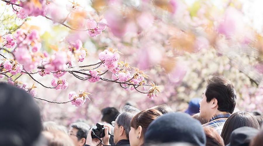 2018新版苏州最美赏花时间表出炉!365天都有地方