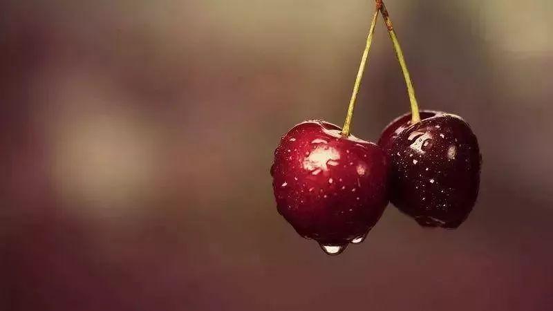 苏州夏季水果采摘圣地推荐 约上小伙伴去体验亲手采摘的乐趣