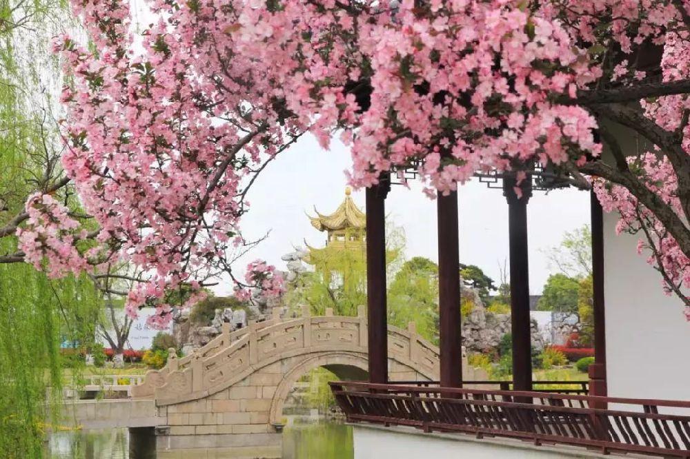 苏州太湖西山岛春季赏花好去处 一大波花仙正在从春风里赶来