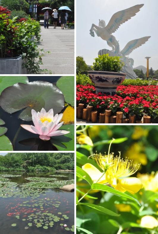 2019苏州白马涧龙池景区茉莉花节(时间 门票 看点)