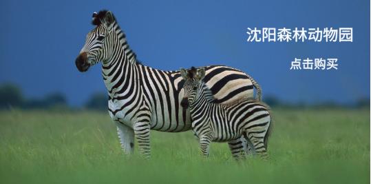 【沈阳森林动物园】拥有多种珍稀野生动物的综合性动物园