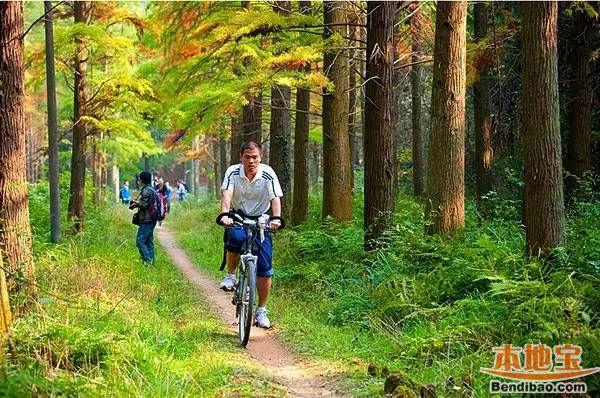 11香草世界森林公园图片