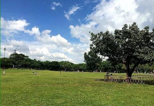 深圳哪些公园有草坪