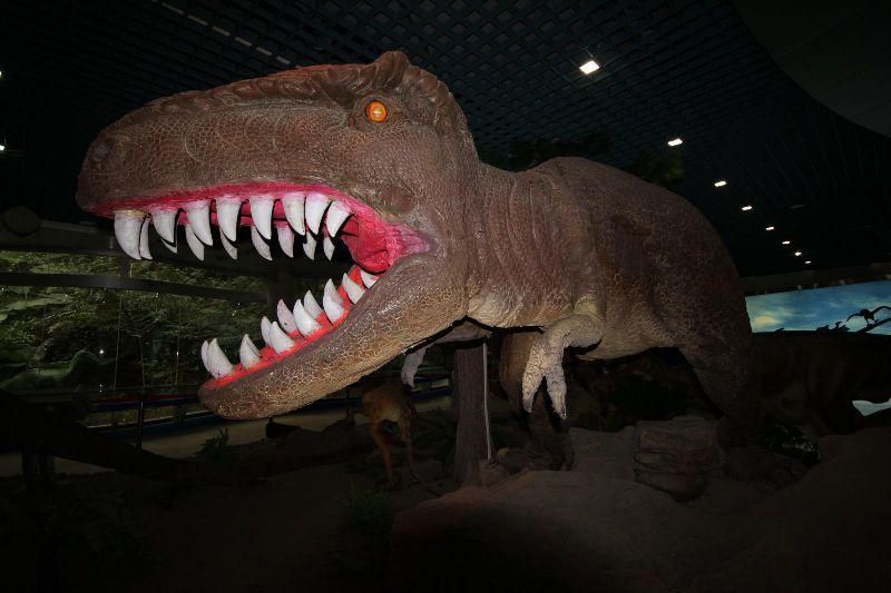 古生物博物馆孔龙