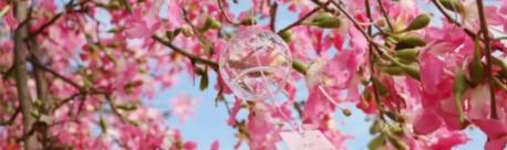深圳山水田园樱花节门票及购票通道