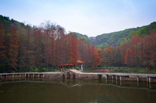 仙湖植物园/弘法寺春节预约入园通告
