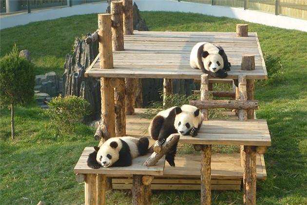 【大连】森林野生动物园,与小动物们来场夏日约会吧!