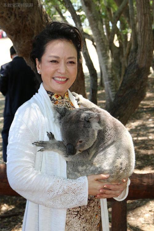 澳大利亚昆士兰州抱考拉攻略