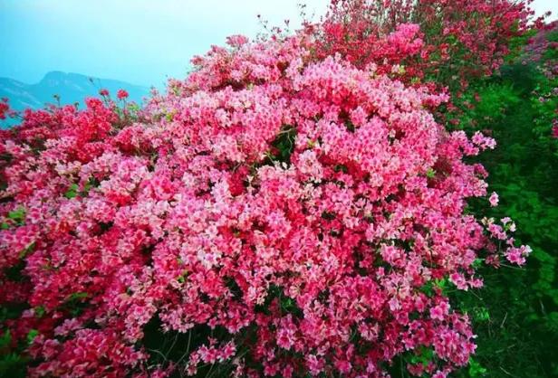 威海9个春游好去处 感受春季的美好