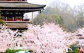 游记分享:武汉东湖一日游