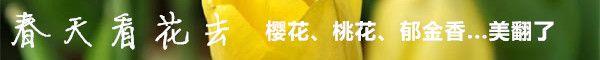 2019武汉东湖樱花节(时间/门票)