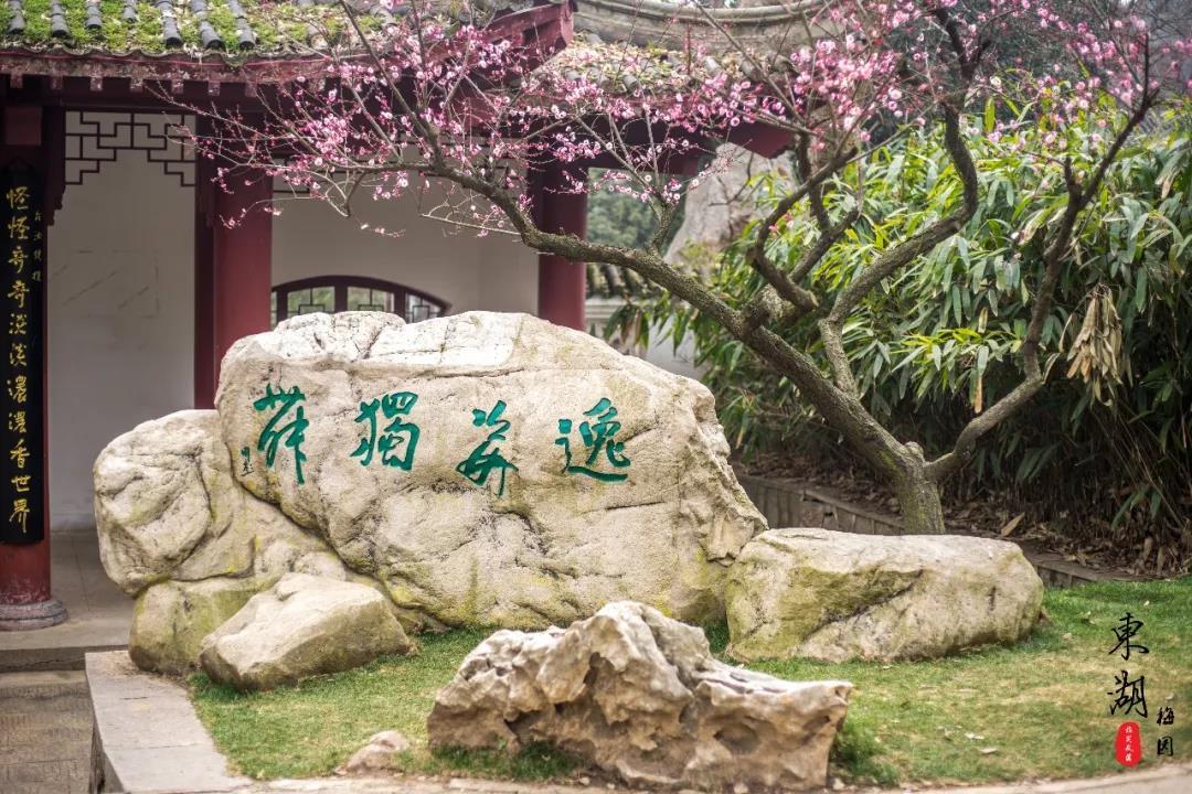2019武汉东湖梅花节门票价格是多少?谁可以免门票?