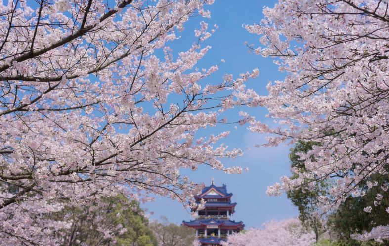 2018无锡鼋头渚樱花节(时间+门票+亮点)