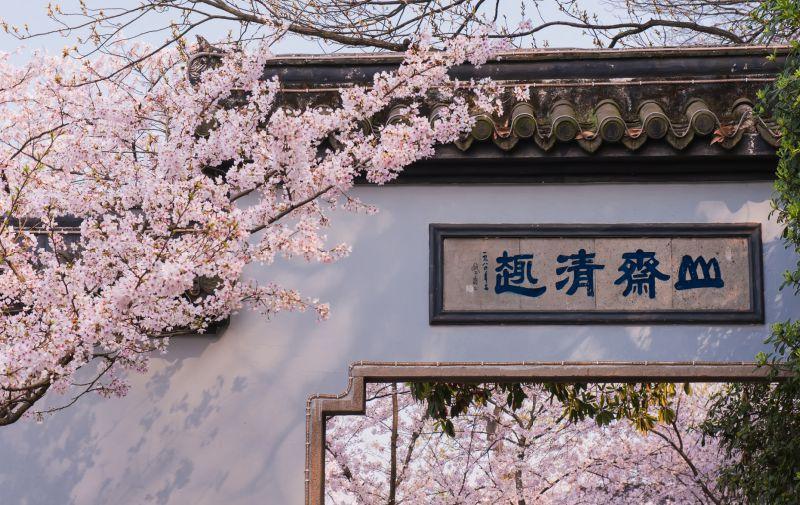 鼋头渚樱花节活动