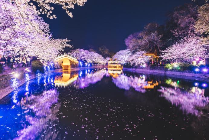 无锡鼋头渚长春桥樱花观赏攻略