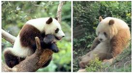 2017陕西省动物研究所招聘行政助理公告