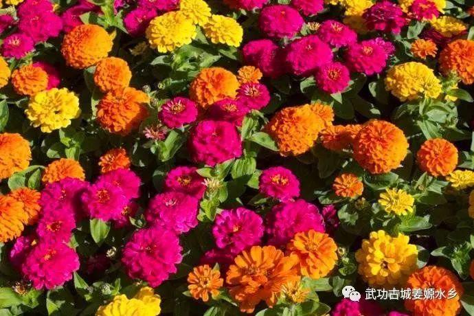 2018咸阳姜嫄水乡四季花海免费日活动时间、交通详情