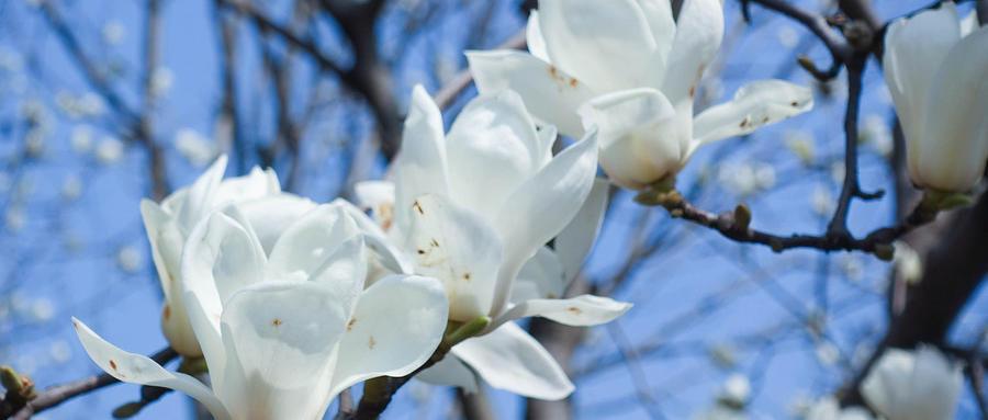 2019西安长安区春季赏花好去处