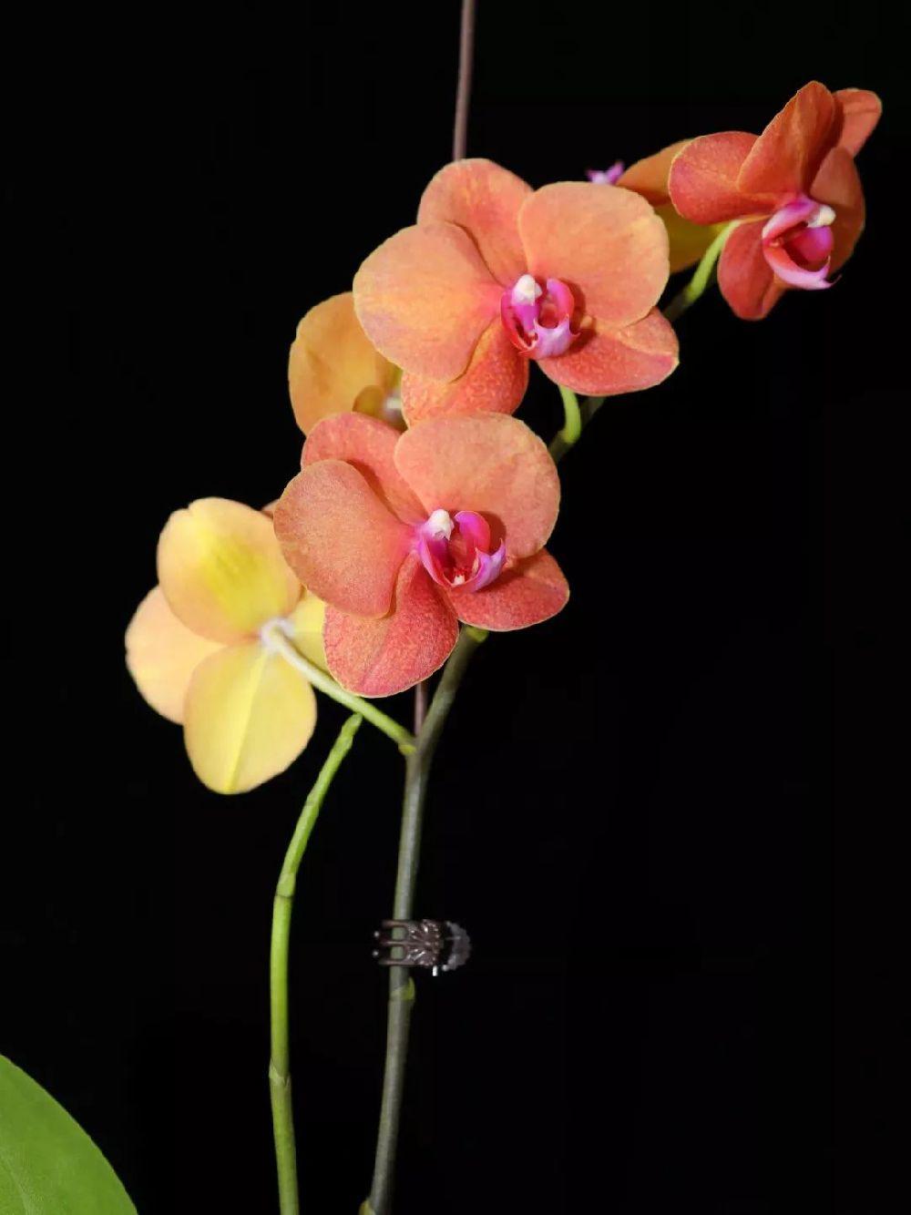五一厦门园林植物园赏花