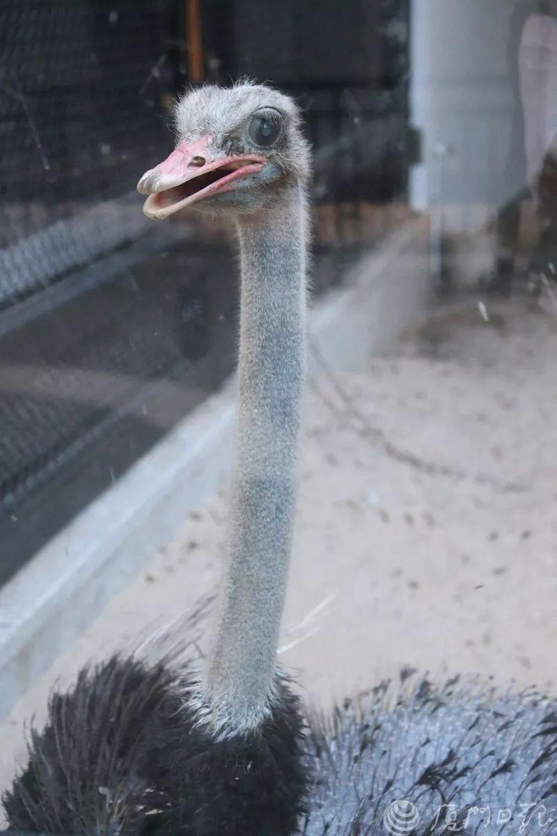 厦门中山公园动物园游玩攻略(时间 免票)